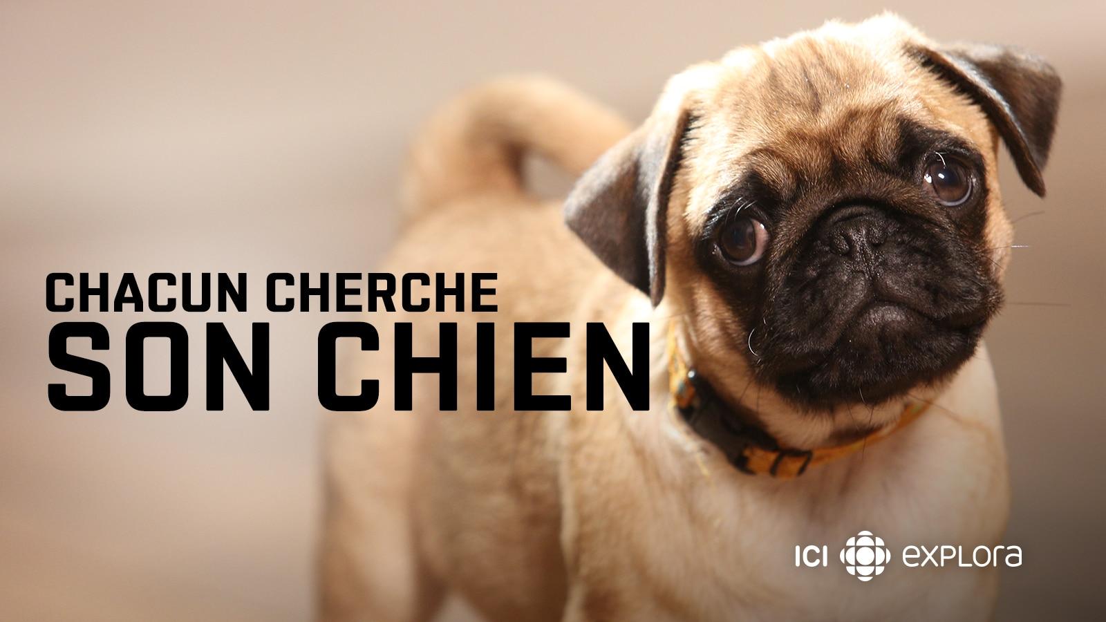Chacun Cherche Son Chien Ici Tou Tv